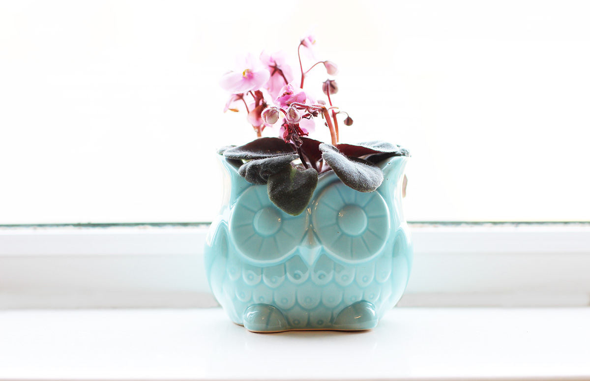 marks-and-spencer-owl-plant,-mothers-day-gift-ideas,-buttercrane-newry